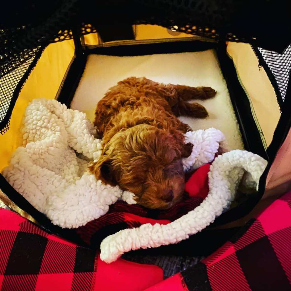 Laura Wright Wes Ramsey puppy