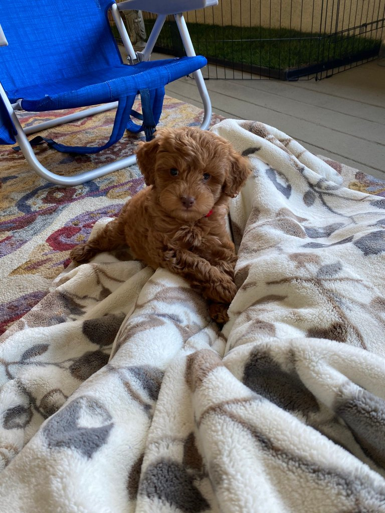 Laura Wright Wes Ramsey Puppy 4