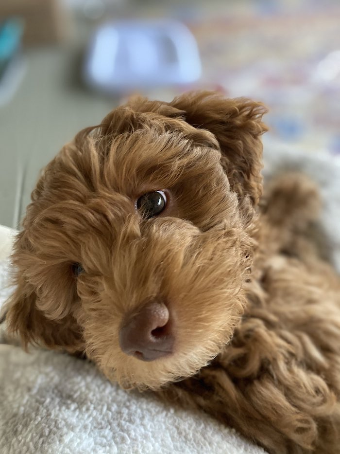 Laura Wright Wes Ramsey puppy 8