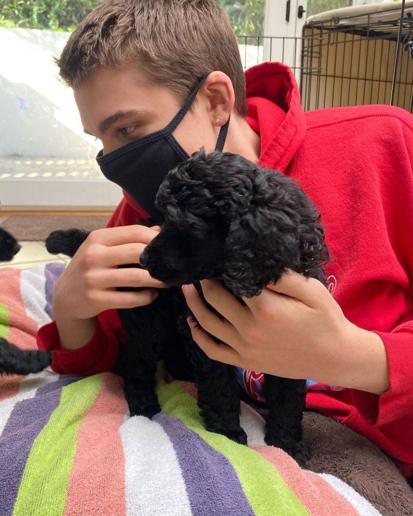 William Lipton Puppy 02